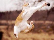 Сколько пальцев у кошки - на задних и передних лапах