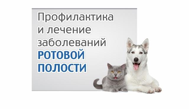 Мирамистин для кошки: инструкция по применению