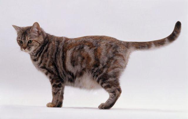 Сколько месяцев кошка носит котят - длительность беременности