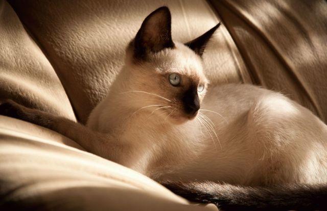 11 причин почему кошка вылизывает шерсть до кожи