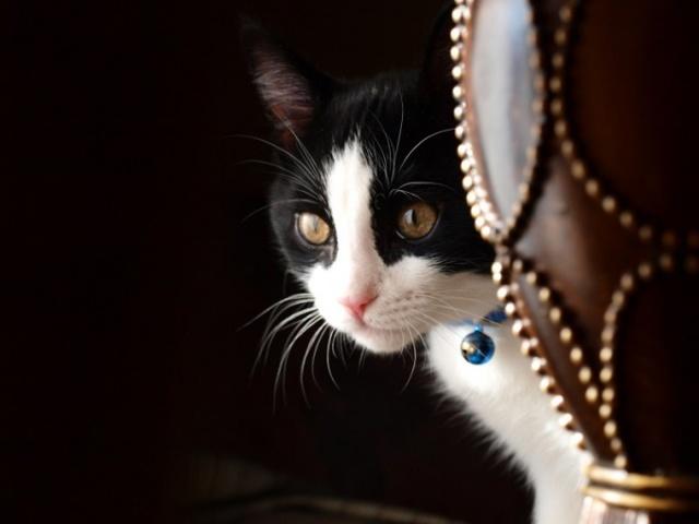 Кошка съела нитку - что делать, как извлечь