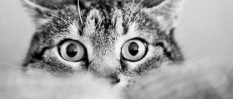 Что делать если котенок не ходит в лоток