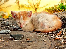Продолжительность жизни кота в домашних условиях