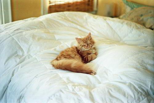 Как отучить кошку писать на кровать?
