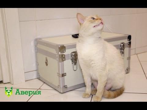 4 способа как заставить кота поесть