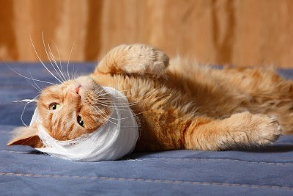 5 причин почему у кошки чешутся уши - что делать