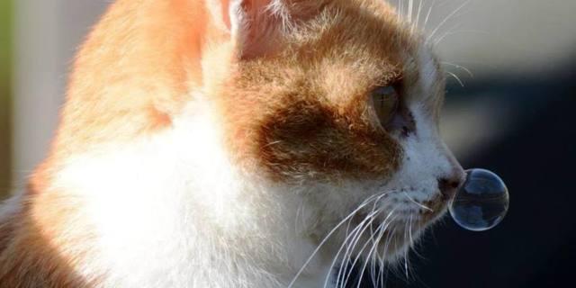10 причин соплей у кота и кошки - как лечить