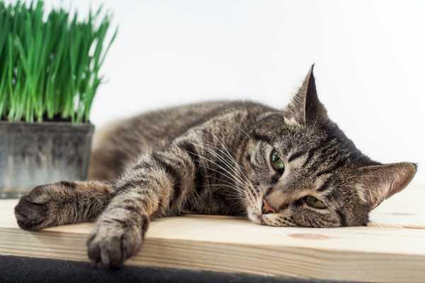 Таблетки Стоп-стресс для кошек - инструкция по применению