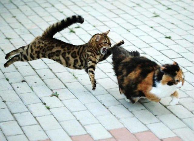 Почему у котенка выпадает шерсть