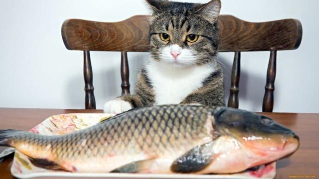 Можно ли кошке давать сырую рыбу - почему нельзя