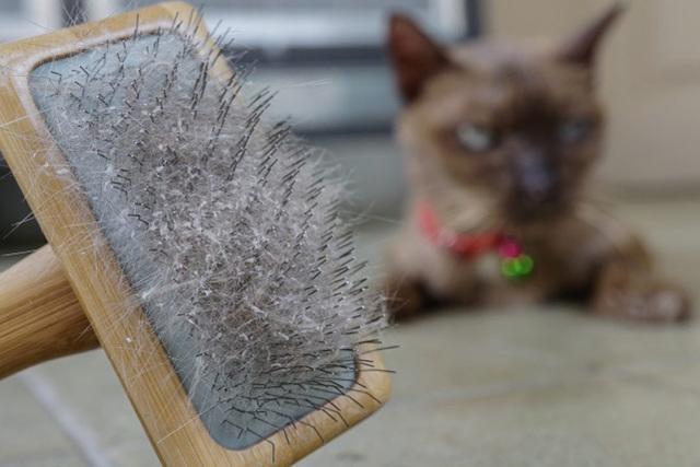 Что делать владельцу, если у кошки или кота перхоть