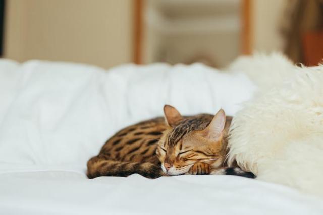 Чем можно заразиться от кошки человеку - список и описание болезней