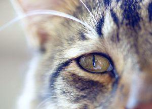 12 причин почему у кошки слезятся глаза - симптомы, лечение