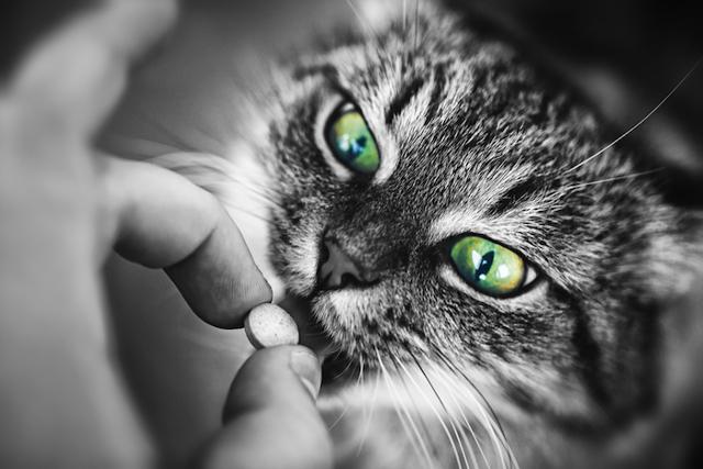 Фталазол для кошек - инструкция по применению, состав, дозировка