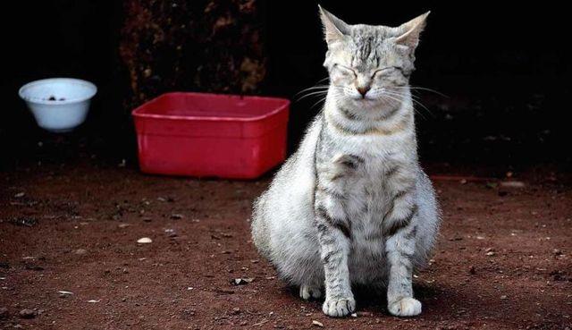 5 причин почему у кошки раздулся живот и бока - как лечить