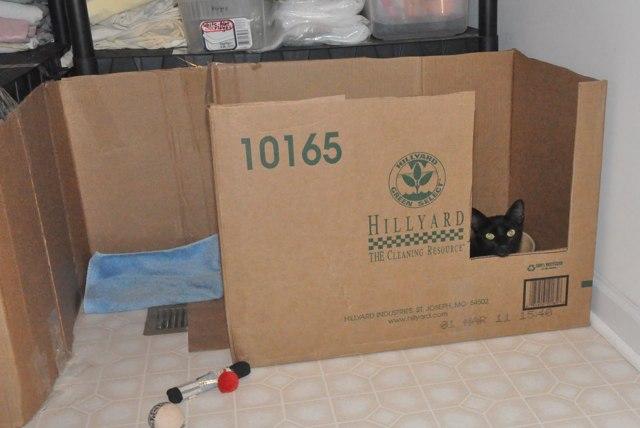 Как принять роды у кошки в домашних условиях - что нужно знать