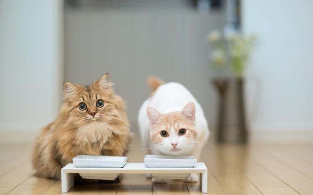 Прогноз при почечной недостаточностью у кошек