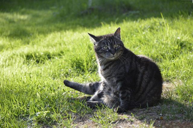 Корм Акана для кошек - состав и описание