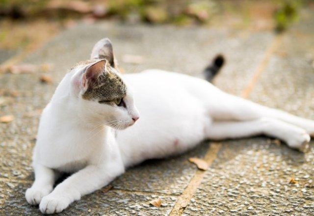 Кошка родила мертвого котенка - причины и что делать