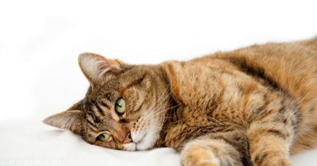 Рвота у кота желтого цвета - причины, лечение, симптомы