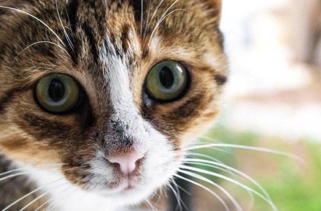 Фурацилин для кошек - как промывать нос