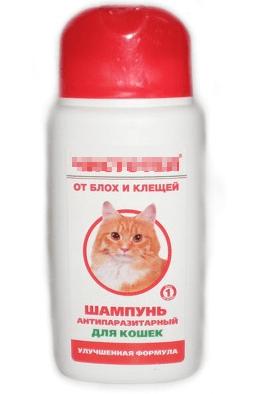 Как избавиться от блох у котенка - профилактика и лечение