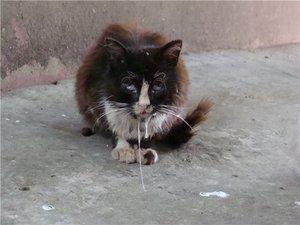 Бешенство у кошек - симптомы, формы, лечение, профилактика