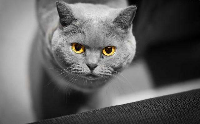 Лептоспироз у кошки: причины и симптомы
