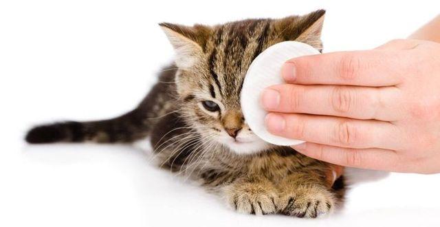 У кошки насморк и слезятся глаза - что делать