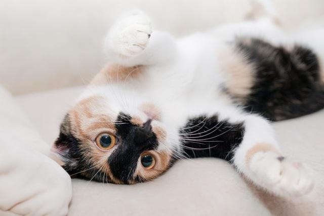 Как правильно гладить кошку чтобы ей нравилось