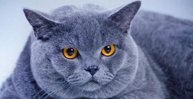 7 причин почему кошка храпит во сне - нормально ли это и что делать