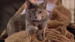 4 причины почему кошка делает массаж лапками