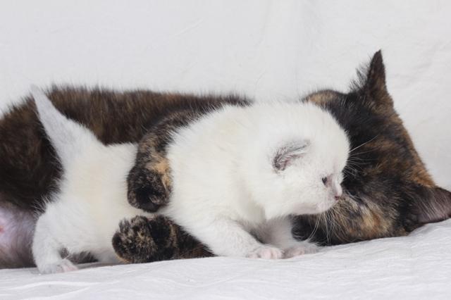 Как подготовить место для родов кошки - основные правила
