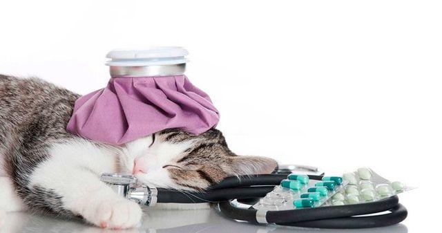 Цефтриаксон для кошек - инструкция по применению, состав, дозировка