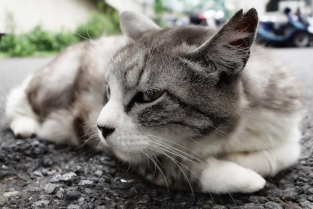 4 причины почему у кота опух нос - как лечить