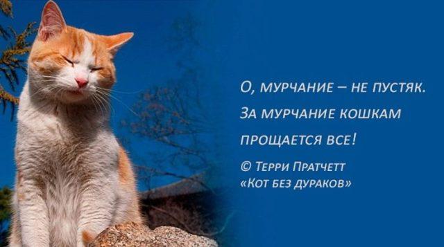 Почему кошки мурчат - причины и как они это делают
