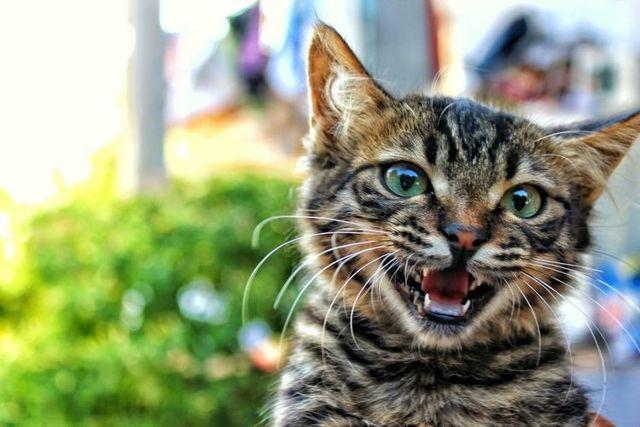 ТОП 5 причин, почему у кошки заворот кишок: что делать