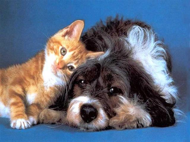 Кошка или собака - кто лучше и кого лучше завести