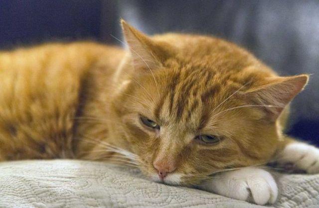 6 причин почему кот часто дышит - симптомы и что делать