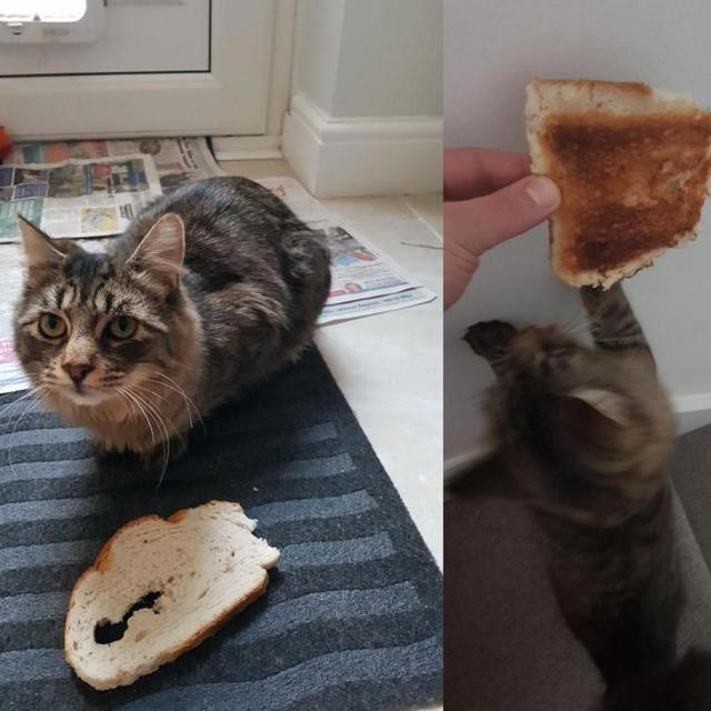 Хлеб кошкам: можно или нет