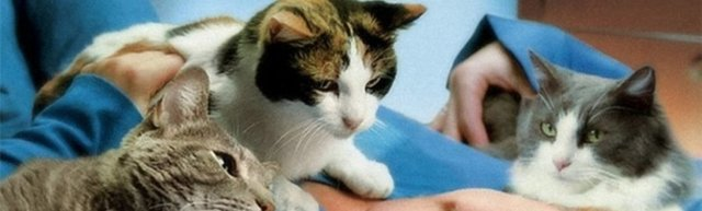 Как кошки лечат людей - миф или правда