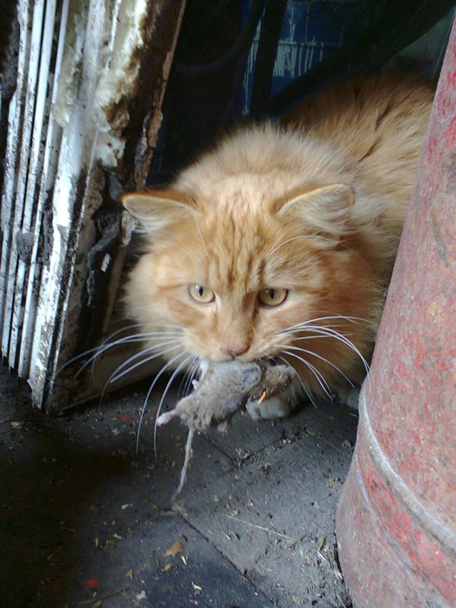 5 причин нефрита у кошек - симптомы и лечение