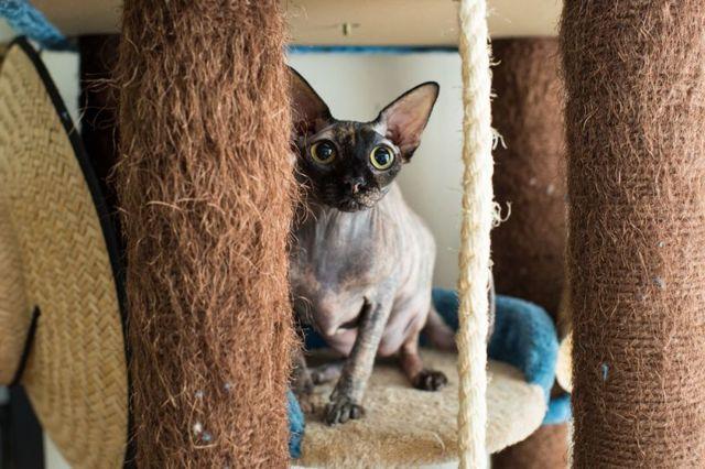 Почему у кошек светятся глаза в темноте