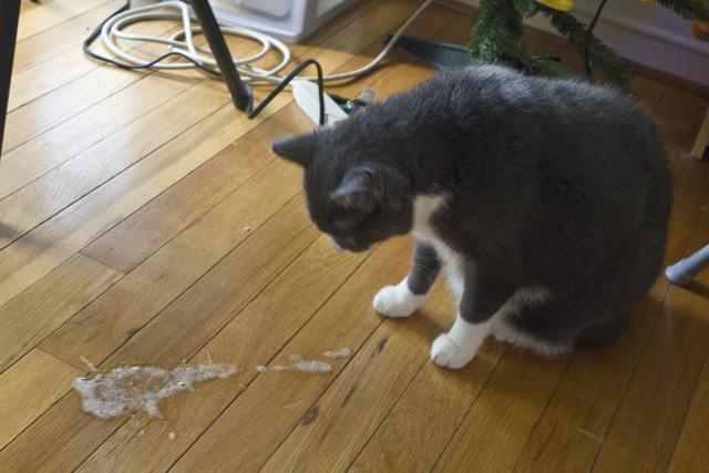 4 причины почему у кота рвота с кровью - лечение и что делать