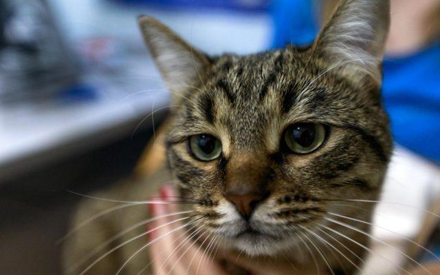Может ли кошка заразиться от человека простудой или гриппом