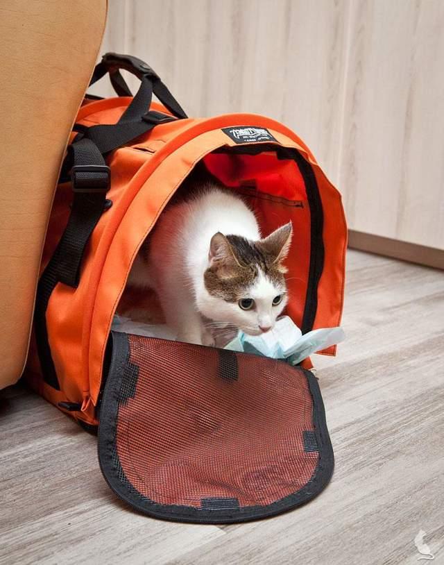 Как обездвижить кота: 5 этапов действия
