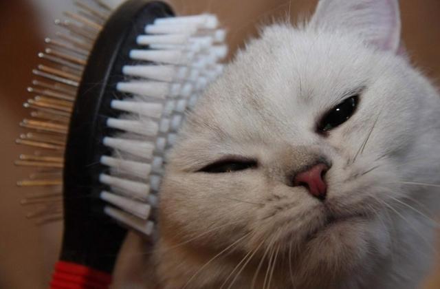 6 причин почему кошки линяют - что делать?