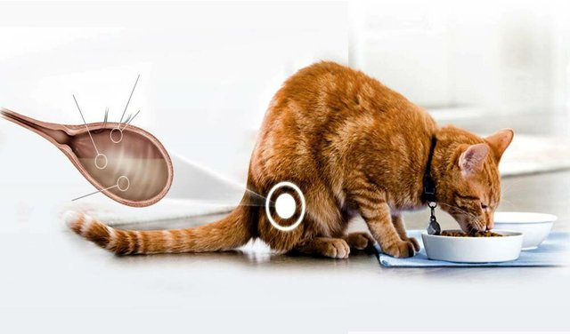 Нитроксолин для кошек - инструкция по применению препарата