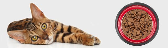 Котенок не ест сухой корм - что делать