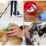 Как понять что у кошки блохи - 4 признаки паразитов